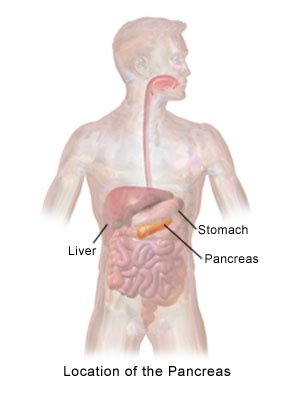 Location of the Pancreas