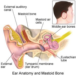 Ear Anatomy and Mastoid Bone