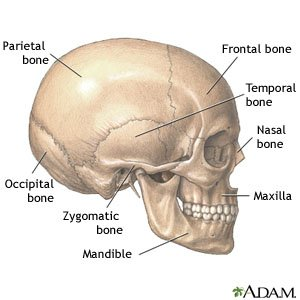 Facial Fracture - What You Need to Know