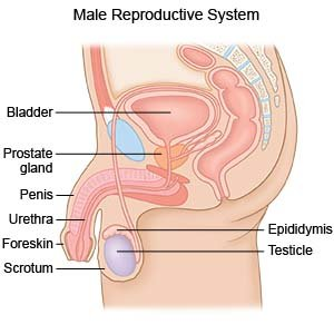 Suprapubic Prostatectomy What You Need To Know