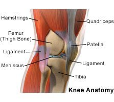 Picture of a normal knee