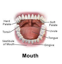 Picture of a normal mouth