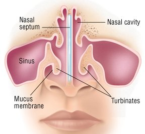 Nosebleed (EPISTAXIS) Guide: Causes, Symptoms and Treatment Options