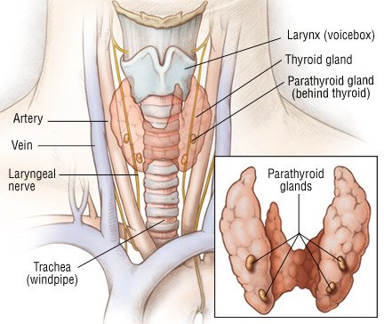 Thyroid Cancer Guide Causes Symptoms And Treatment Options