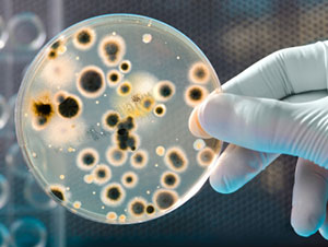 The Shocking Truth About Antibiotic Resistance
