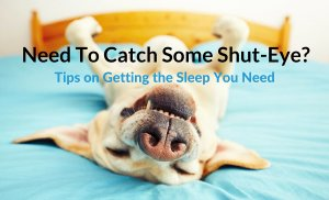 Need To Catch Some Shut-Eye? Tips on Getting the Sleep You Need