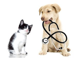 Is it Safe to Give Human Medicine to Pets?
