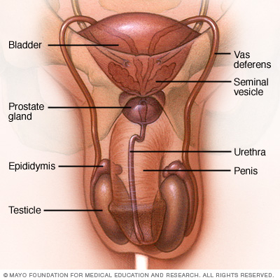 testicle infection and sex partner jpg 853x1280