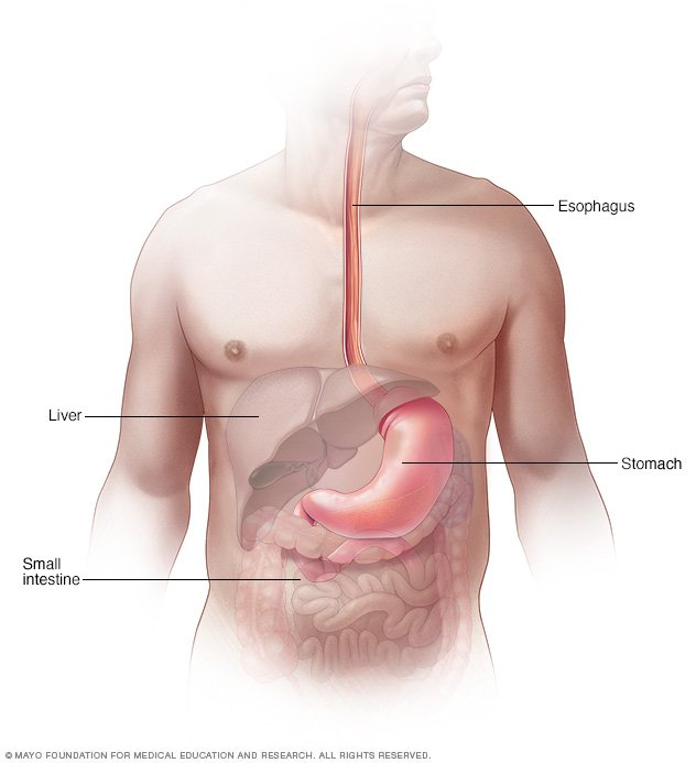 Esophageal Spasms Disease Reference Guide