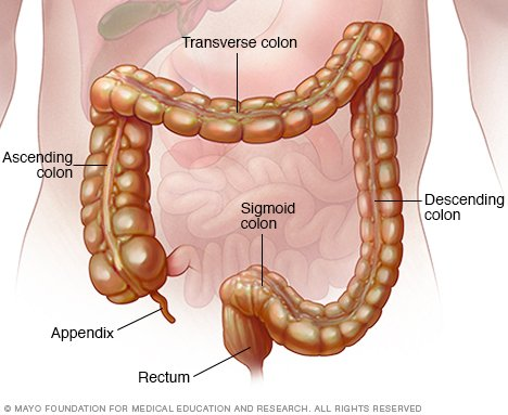 Colon hanging out of anus