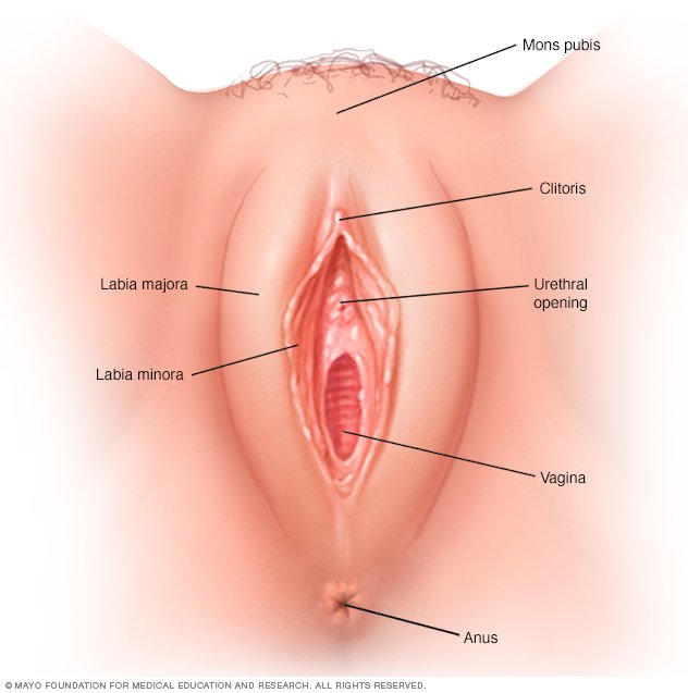healthy signs of vagina a